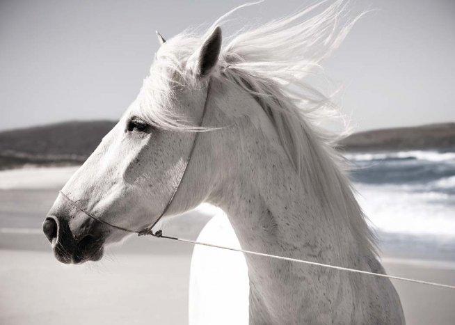 White Horse On Beach Plakát